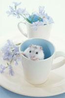 白と青のカップに入るジャンガリアンハムスター