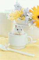 花と白いカップの中に入るジャンガリアンハムスター