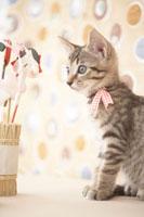 猫と正月飾り