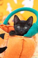 黒猫とハロウィン小物