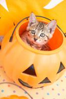 猫とハロウィン小物