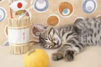 横になる猫と正月小物