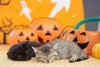 眠っている2匹の猫とハロウィン小物