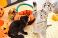 2匹の猫とハロウィン小物