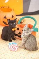 2匹の猫とハロウィンイ小物