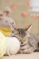 寝ている猫と毛糸玉