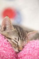 クッションの上で眠っている猫
