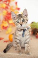 猫と秋のイメージ