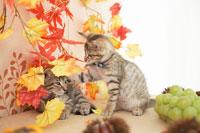 2匹の猫と秋のイメージ