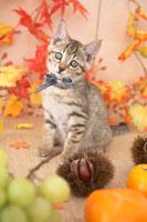 猫と柿と栗とぶどうと紅葉