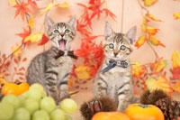2匹の猫と柿と栗とぶどうと紅葉