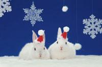 サンタ帽を被った2匹のウサギ