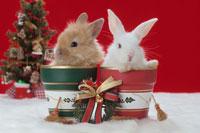 2匹のウサギとクリスマス小物