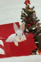 ギフトボックスから顔を出すウサギとクリスマスツリー