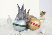 2匹のウサギ(ネザーランドドワーフ)とリンゴのオブジェ