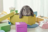 ギフトボックスに囲まれたウサギ