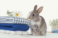 ウサギとタオル