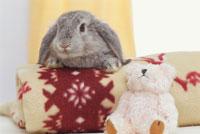 ブランケットに手をかけるウサギとぬいぐるみ