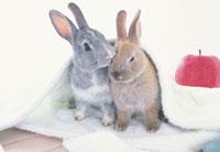 白いタオルを被った2匹のウサギとリンゴ