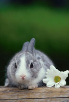 ウサギと白い花