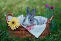 カゴの中のウサギと黄色い花