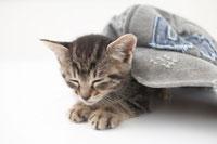猫(雑種)と帽子