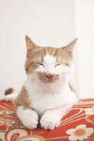 クッションの上で眠る子猫(雑種)
