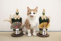 門松の間に座る子猫(雑種)