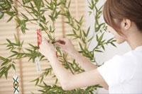 短冊を付ける女性 21028010711| 写真素材・ストックフォト・画像・イラスト素材|アマナイメージズ