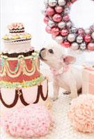 ケーキをつつくフレンチブル
