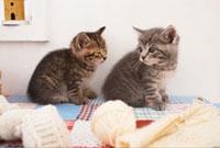 毛糸と2匹の猫