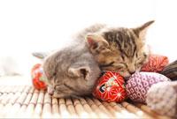 お手玉の上で眠る猫