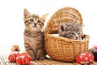 お手玉と猫