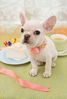 ケーキとフレンチブルドッグ