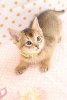 猫 21028011821C| 写真素材・ストックフォト・画像・イラスト素材|アマナイメージズ
