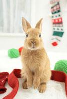 うさぎとクリスマスの靴下
