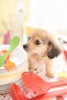キッチングッズとお皿とミニチュアダックスフンド