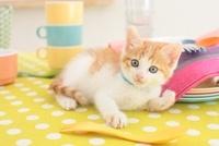 日本猫とキッチン小物