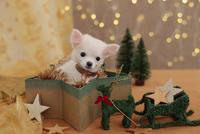 チワワのクリスマスイメージ