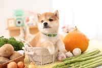 1匹の柴犬 21028019846| 写真素材・ストックフォト・画像・イラスト素材|アマナイメージズ