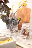 アメリカンショートヘアの子猫 21028022305| 写真素材・ストックフォト・画像・イラスト素材|アマナイメージズ