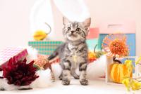 アメリカンショートヘアの子猫 21028022363  写真素材・ストックフォト・画像・イラスト素材 アマナイメージズ