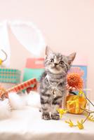 アメリカンショートヘアの子猫 21028022366  写真素材・ストックフォト・画像・イラスト素材 アマナイメージズ