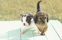 寄り添う2匹の犬