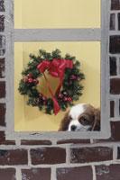 窓から外を見る犬と屋内のクリスマスリース