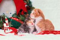 寄り添う2匹の仔猫
