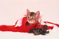 赤い靴下と仔猫