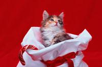 白いプレゼント袋に入った猫