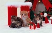 3匹の子猫とクリスマスリース