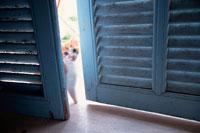 水色の木戸の間から覗いた仔猫
